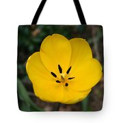Lone Yellow Tulip Tote Bag