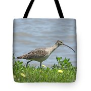 Long Billed Curlew At Palacios Bay Tx Tote Bag