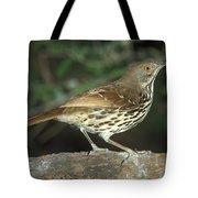 Long-billed Thrasher Tote Bag