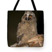 Long-eared Owl Asio Otus Tote Bag