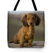 Long-haired Dachshund Puppy Tote Bag
