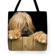 Long-haired Dog Tote Bag