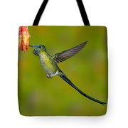 Long-tailed Sylph Tote Bag