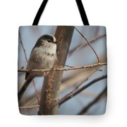 Long-tailed Tit Perched On Twig Tote Bag