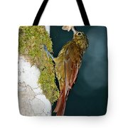 Long-tailed Woodcreeper Tote Bag