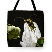 Longhorn Beetle Feeding Tote Bag