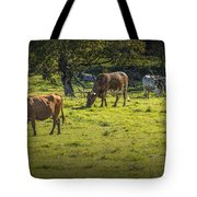 Longhorn Steer Herd In A Pasture Tote Bag