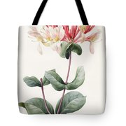 Lonicera Periclymenum  Tote Bag by Louise D Orleans