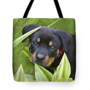 Look For Me Tote Bag by Heiko Koehrer-Wagner