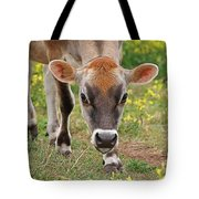 Look Into My Eyes - Jersey Cow - Square Tote Bag