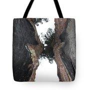 Look Up Between The Trees Tote Bag