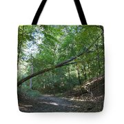 Looking For Sunlight Tote Bag
