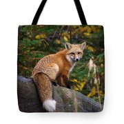 Looking Pretty Foxy Tote Bag