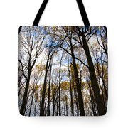 Looking Skyward Into Autumn Trees Tote Bag