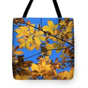Looking Up To Yellow Leaves Tote Bag