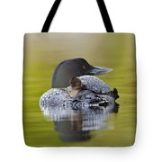 Loon Chick Resting On Parents Back Tote Bag