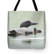 Loon Chick Sticks Close To Parent Tote Bag
