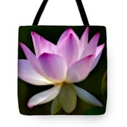 Lotus And Buds Tote Bag by Susan Candelario