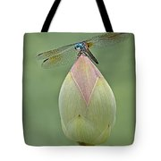 Lotus Bud And Dragonfly Tote Bag
