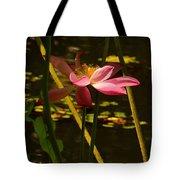 Lotus Flower At The West Lake Tote Bag