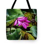 Lotus Flower- Gungarre Billabong Tote Bag