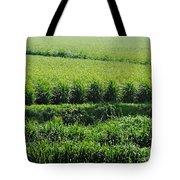 Louisiana Cane Field Tote Bag