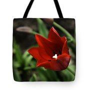 Love Tulip Time Tote Bag