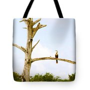 Low Angle View Of Cormorants Tote Bag