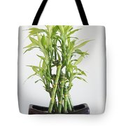 Lucky Bamboo Plant Tote Bag