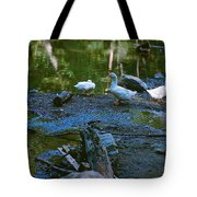Lucky Ducks Tote Bag