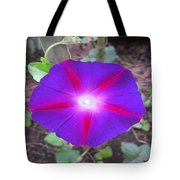 Luminous Morning Glory In Purple Shines On You Tote Bag