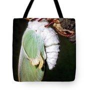 Luna Moth Actias Luna Newly Hatched Tote Bag