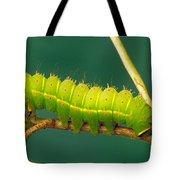 Luna Moth Caterpillar Tote Bag