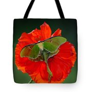 Luna Moth Orange Poppy Green Bg Tote Bag