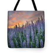 Lupine Dawn Tote Bag