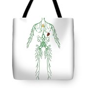 Lymphatic System, Illustration Tote Bag