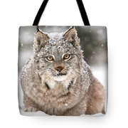 Lynx Stare Tote Bag