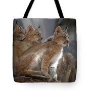 Lynx Trio Tote Bag