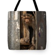 Macaque Peeking Out Tote Bag