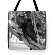 Macaws Of Color B W 15 Tote Bag
