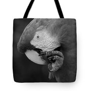 Macaws Of Color B W 18 Tote Bag