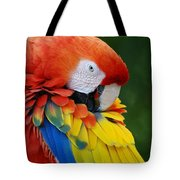 Macaws Of Color28 Tote Bag
