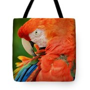Macaws Of Color29 Tote Bag