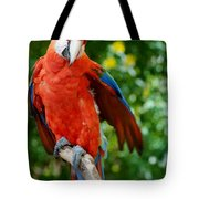 Macaws Of Color30 Tote Bag