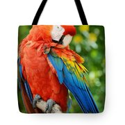 Macaws Of Color31 Tote Bag