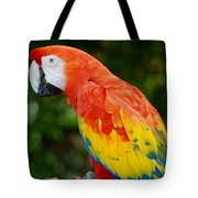 Macaws Of Color33 Tote Bag