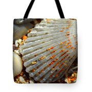 Macro Shell On Sand 4 Tote Bag by Riad Belhimer
