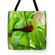 Madagascar Fody On Palm Tree Tote Bag