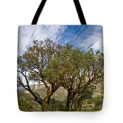 Madrone Trees Tote Bag