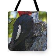 Magellanic Woodpecker Tote Bag